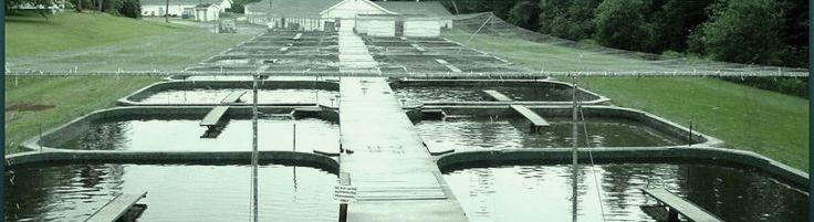 Aquaculture Hydraulic/Hydrostatic Transmissions